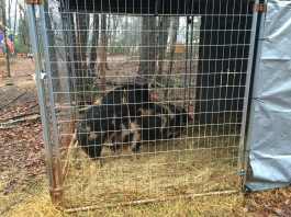 A dog kennel is a must-have as a temporary breeding or holding pen, sick pen, or area in which to trim hooves or tusks.