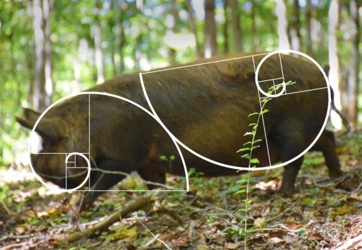 Melody Fibonacci.notext