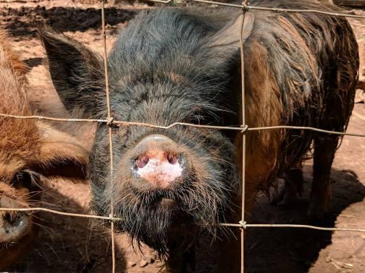 Andrew boar, Brewster